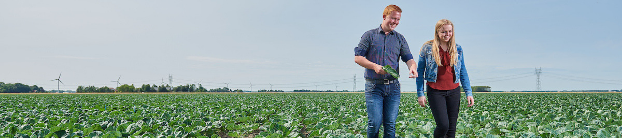 Arable farming students from Aeres University of Applied Sciences in field with cabbage