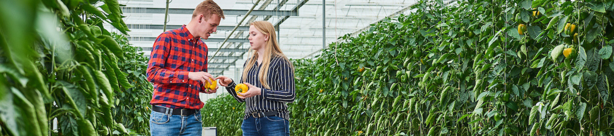 Arable farming students from Aeres University of Applied Sciences in greenhouse with capsicum