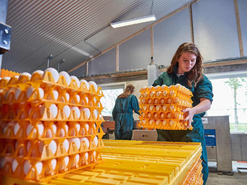 Student from Aeres University of Applied Sciences with eggs at poultry farm at Aeres Farms